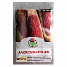 Bibit Bunga Benih Dramaga Jagung Ungu IPB J2 – 50 Biji