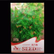 Bibit Bunga Benih Lucid Asparagus 6 Biji – Retail Asia