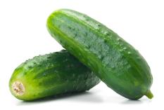 Bibit Bunga Benih Mentimun (Green Cucumber)