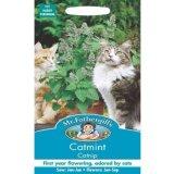 Beli Bibit Bunga Benih Mr Fothergills Catnip Catmint Di Indonesia