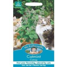 Review Bibit Bunga Benih Mr Fothergills Catnip Catmint Bibit Bunga