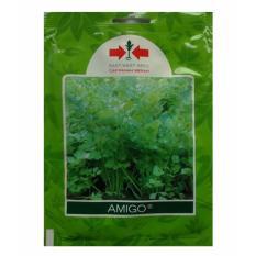 Bibit Bunga Benih Panah Merah Seledri Amigo – 20 gram