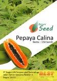 Review Bibit Bunga Benih Pepaya Calina Ipb 9 Di Sulawesi Selatan