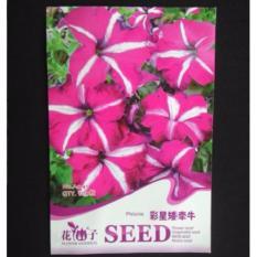 Bibit Bunga Benih Petunia Pink Strip Putih 60 Biji – Retail Asia