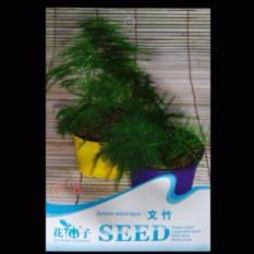 Bibit Bunga Benih Setose Asparagus 6 biji – Retail Asia
