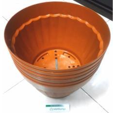 Jual Bibit Bunga Pot Bunga Vanda 3000 Merah Bata 6 Pcs