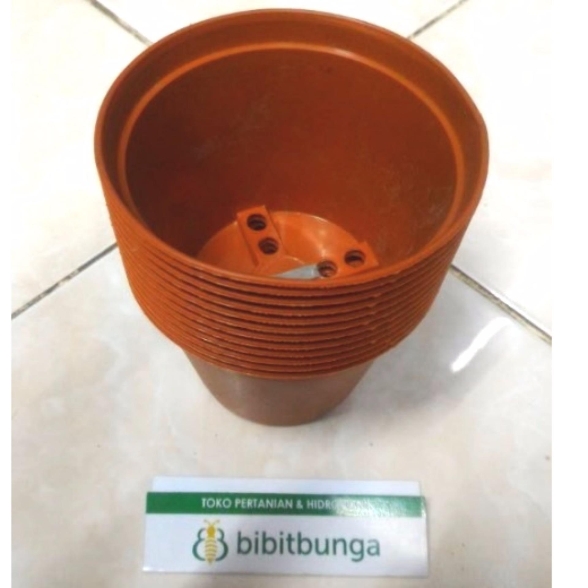 Harga preferensial Bibit Bunga Pot Bunga Vanda 950 Merah Bata beli sekarang  - Hanya Rp7. 4251d476ed