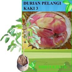 Bibit Eksotic Durian Pelangi Kaki 3