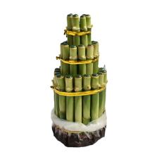 Bibit Tanaman Bambu Rejeki Pagoda 3T
