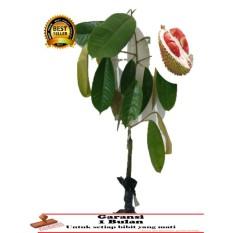 BIBIT TANAMAN Durian merah