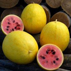 Rp 25.000 biji benih buah semangka golden berisi 4 butirIDR25000