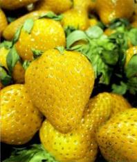biji benih buah strawberry kuning berisi 15 butir