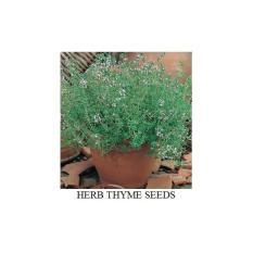 150 Biji Herb Thyme