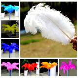 Jual Beli Bolehdeals 10 Buah Kerajinan Bulu Burung Unta Untuk Kostum Topi Sebelum Diseduh Sendiri Dekorasi Putih Tiongkok