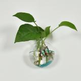 Review Tentang Bolehdeals 12 Cm Bola Kaca Bening Bentuk Wall Hanging Vas Bunga Botol Dekorasi Rumah Tanaman
