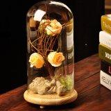 Spesifikasi Bolehdeals Bentang Alam Kubah Kaca Penutup Nampan Wadah Vas Topping Bunga Tanaman Baru