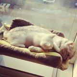 Cat Basking Jendela Hammock Perch Cushion Bed Hanging Shelf Seat Murah