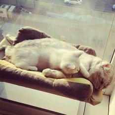 Cat Basking Jendela Hammock Perch Cushion Bed Hanging Shelf Seat Asli