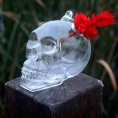 Harga Garden Flower Pot Skull Shape Hanging Glass Vases Other Yard Outdoor Quality Intl Asli Oem