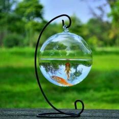 Review Toko Hydroponic Wall Hanging Bubble Aquarium Ikan Kaca Diy Pot Vas Tanaman Dekorasi Rumah Hitam Internasional Online