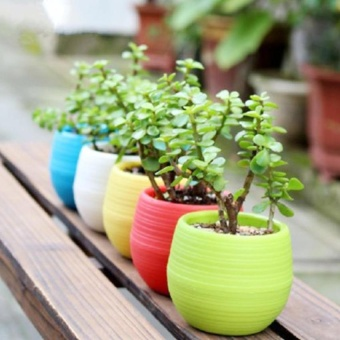 Pencarian Termurah Kolam Balkon Kebun Tanaman Pot Penanam Bonsai Patio  Dekorasi Rumah Kantor harga penawaran - e67e4c5256