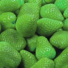 Isi 30 Butir Benih Buah Stroberi Hijau / Green Strawberry
