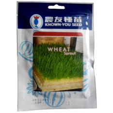 Known You Seed Wheat Sprout - Benih Wheatgrass -50 gram