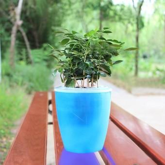 Pot Panjang Regtagulator 55cm Update Daftar Harga Terbaru Indonesia Source · Lumiparty Warna warni Diri Penyiraman Sepanjang Planter Bunga Pot Rumah Taman ...