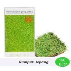 Maica Leaf Benih/Bibit Rumput Jepang - Isi 150 Butir