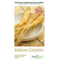 Maica Leaf Gingseng Korea Benih Tanaman Herbal [10 Benih]