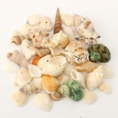 Campuran Sea Shell Keong Seashell Aquarium Beach Fish Tank Meja Pernikahan Dekorasi Hadiah-Internasional