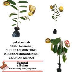PAKET 3 BIBIT TANAMAN DURIAN MONTONG-MUSANGKING-MERAH