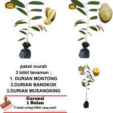 PAKET 3 BIBIT TANAMAN DURIAN MONTONG,BANGKOK,MUSANGKING
