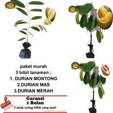 PAKET 3 BIBIT TANAMAN DURIAN MONTONG,MAS,MERAH