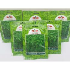 paket 4 pcs- benih kangkung bangkok LP-1 Panah merah, jual benih kangkung untuk rumahan, biji kangkung, kangkung cabut