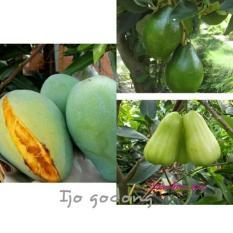 Paket Bibit Mangga Alpukat Jambu Air