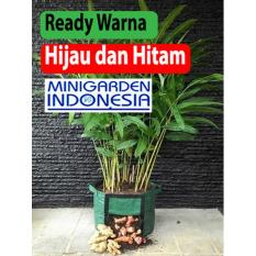 POLYBAG pot bibit tanaman rimpang jahe kunyit kencur lengkuas rhizoma planter bag / planterbag