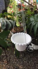 Pot Bunga Gantung Namanya Pot Mawar Bahan Tebal Murah Meriah Pesan Yuk