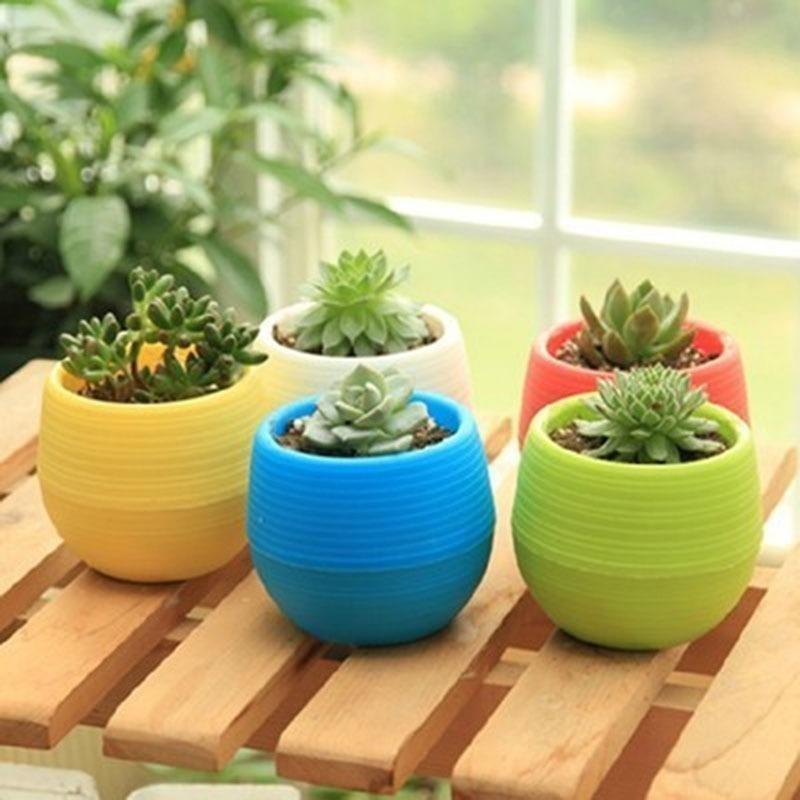 Beli sekarang Pot Bunga Plastik Mini Warna Warni 5 Pcs Vas Bunga Dekorasi Kaktus  terbaik murah 4c2a9b8c45