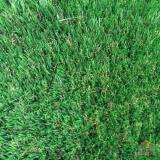 Harga Rumput Sintetis Nature 2Cm Dan Spesifikasinya