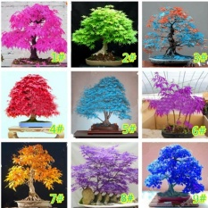 Penjualan Rumah Garden Balcony 20 Pcs Bonsai Maple Bibit Pohon (Multicolor)-Intl