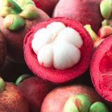Review Tanaman Buah Manggis Di Jawa Timur