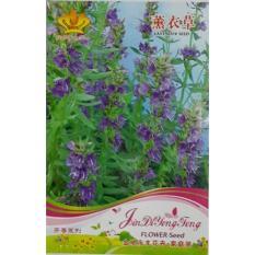 Lavender Bibit Biji Benih Bunga Lavender Import Anti Nyamuk Seed