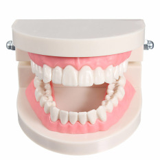 Jual Cepat 1 Pack Dari Dental Gigi Gigi Gigi Model Berwarna Merah Muda Daging Standar