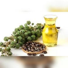 Beli Castor Oil 1000Ml Cosmetic Grade Kredit Jawa Barat