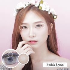 Jual Dreamcolor1 Softlens Nobluk Minus 1 25 Brown Gratis Lens Case Dreamcolor1 Asli