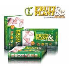 Jual Fruit Plant Asli 100 Original Pelangsig Badan Alami Branded Murah
