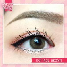 Softlens Kitty Kawaii Cottage - Brown - Gratis Lens Case