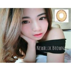 Softlens Newbluk - Brown + Free Lenscase