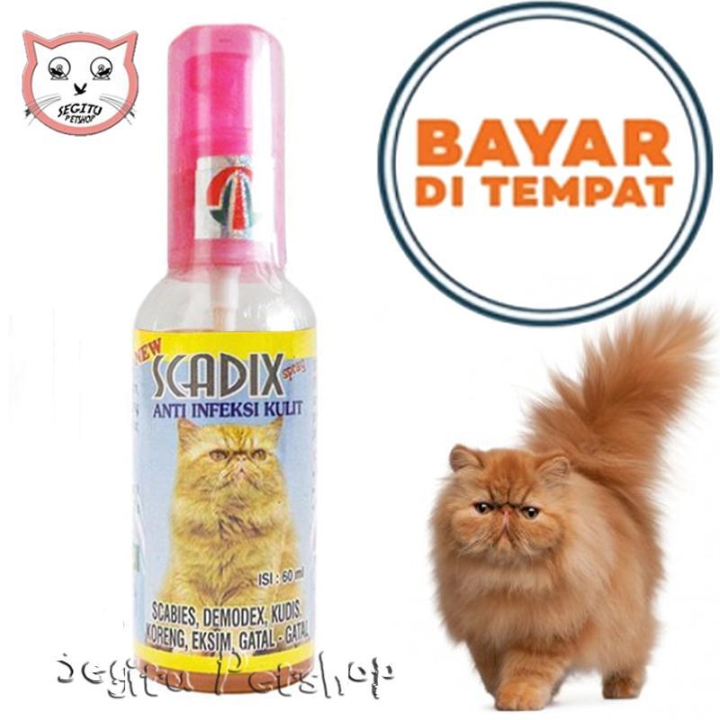 Obat Jamur Kucing Koreng Kitten Scadix By Lucky Petshop.